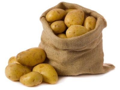 Sbírka brambor pro Olomoucký seminář
